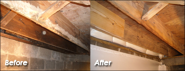 Crawl Space Mold Removal before and after