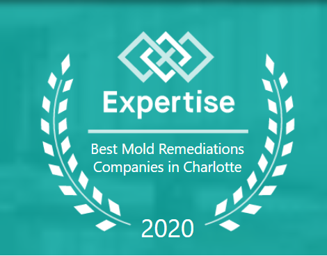 Best Mold Remediation Companies in Charlotte